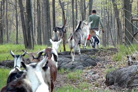 aboutus_goats