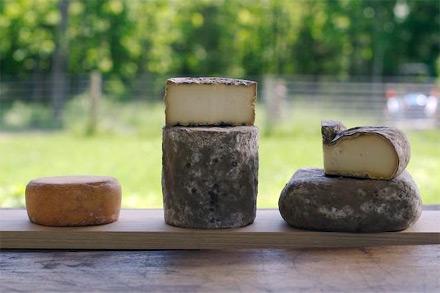homepage_cheese